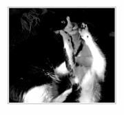 Black And White Cats Posters - The Dance 5 Poster by Margaret Hood