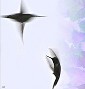 Image Of Bird Prints - The Dance Of Life Print by Debra     Vatalaro