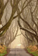 The Dark Hedges Prints - The Dark Hedges Print by Hubert Leszczynski