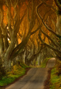 Morning Lights Framed Prints - The Dark Hedges II Framed Print by Pawel Klarecki