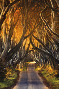 Canon 70-200 Posters - The Dark Hedges III Poster by Pawel Klarecki