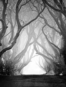 Pawel Prints - The Dark Hedges IV Print by Pawel Klarecki