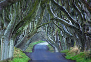 Dark Hedges Prints - The Dark Hedges. Print by Martine Maclennan