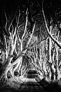 Dark Hedges Posters - The Dark Hedges Poster by Michelle McMahon