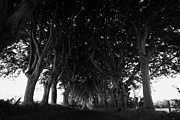 Dark Hedges Posters - The Dark Hedges Old Avenue Of Beech Trees Which Have Overgrown The Road Armoy County Antrim Ireland Poster by Joe Fox