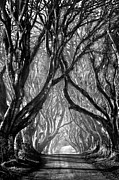 Dark Hedges Prints - The Dark Hedges Print by Stephen Emerson