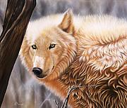 Wolf Portrait Paintings - The Daystar II by Sandi Baker