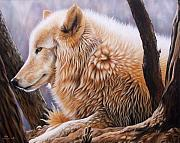 Wolf Portrait Paintings - The Daystar by Sandi Baker