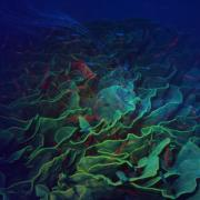 Ocean Floor Posters - The Deep Poster by Barbara Berney