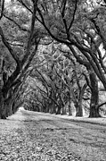 Evergreen Plantation Prints - The Deep South monochrome Print by Steve Harrington