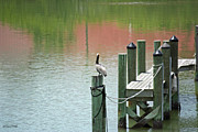 Wood Pylons Photos - The Dock by Terri Mills
