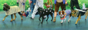 Dalmation Prints - The Dog Parade Print by Marguerite Chadwick-Juner