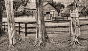 Fauquier County Framed Prints - The Dog Patch BW Framed Print by JC Findley