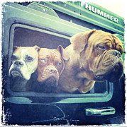 Nina Prommer Prints - The Dog Taxi Is A Hummer Print by Nina Prommer