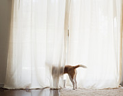 Y120907 Art - The Dog Which Looks At The Outside Of A Window by Yuki Kondo