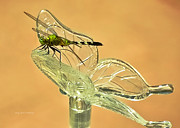 Olive Green Posters - The Dragonfly and The Butterfly Poster by DigiArt Diaries by Vicky Browning
