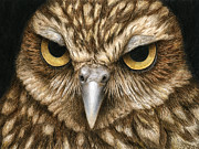 Raptor Paintings - The Dubious Owl by Pat Erickson
