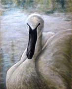 Swan Pastels - The Dutchess by Wendie Thompson