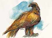 Drawing Of Eagle Drawings - The Eagle Drawing by Angel  Tarantella