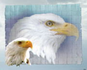 Image Of Bird Prints - The Eagles Focus Print by Debra     Vatalaro