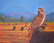 Red-tailed Hawk Paintings - The Early Bird by Bill Werle