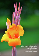 Canna Posters - The Earth Laughs in Flowers Poster by Debbie Karnes