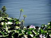 Hong Kong Photos - The Edge of the Lilly Pond by Kathy Daxon