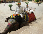 Elephant Photos - The Elephant Jockey of India by Paul Ward