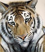 Tiger Metal Prints - The Embrace Metal Print by Sandi Baker