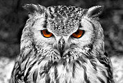 Selective Colouring Prints - The Eyes have it Print by Chris Thaxter