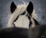 Tinker Horse Art - The Eyes Have It by Elizabeth Sescilla