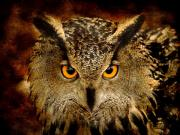 Animals Digital Art Posters - The Eyes Poster by Photodream Art