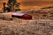 Shed Prints - The Farm Print by David Patterson