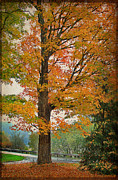 Orange Leaves Framed Prints - The Fay Tree Framed Print by Deborah Benoit