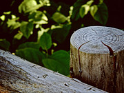 Fence Post Photos - The Fence And The Green by Odd Jeppesen