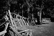 Pelts Prints - The Fence Line at Fort Nisqually Print by David Patterson
