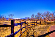 Snow Prints - The Fence Line at South Platte Park Print by David Patterson