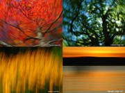 Fotografie Prints - The Fine Art of Camera Panning Print by Juergen Roth