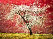 Tree Blossoms Prints - The First Blossoms Print by Tara Turner