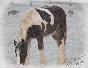 Drum Horse Photos - The First Snow by Terry Kirkland Cook