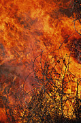 The Flames Of A Controlled Fire Print by Joel Sartore