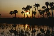 Palmetto Plants Photos - The Flaming Orange Sun Sets by Bates Littlehales