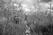 Everglades Metal Prints - The Florida Trail Metal Print by David Lee Thompson