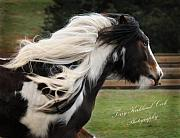 Gypsy Horse Framed Prints - The Flowing Mane Framed Print by Terry Kirkland Cook