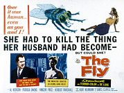 Classic Sf Posters Framed Prints - The Fly, Vincent Price, Patricia Owens Framed Print by Everett