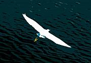 Egret Digital Art Posters - The Flying Egret Poster by David Lee Thompson
