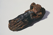 Mummy Prints - The Foot Of An Egyptian Mummy Print by Volker Steger
