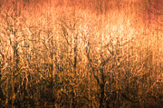 Yellow Trees Photos - The Forest Fire by Justin Albrecht