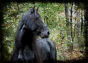Friesian Posters - The Forest Stallion Poster by Terry Kirkland Cook