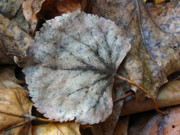 Autumn Leaf Photos - The Forgotten by Juergen Roth